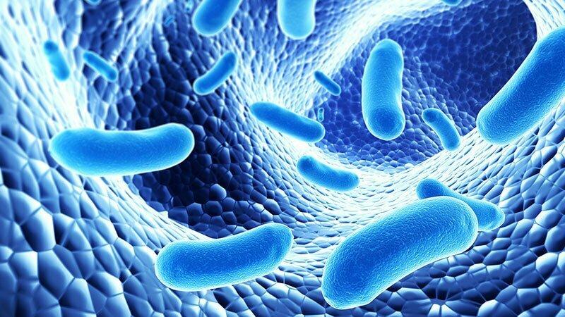 Probiotici – batteri buoni