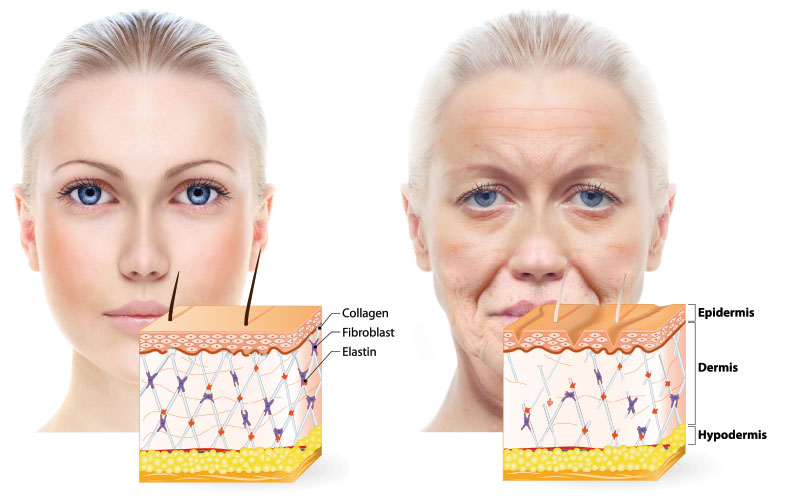 Nutrizione della pelle che sta invecchiando