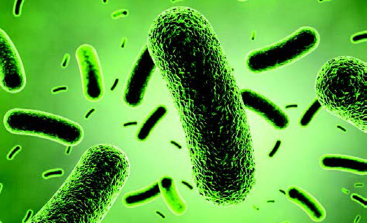 Bacillus coagulans – un probiótico efectivo